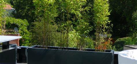 quel bambou pour jardiniere pivoine