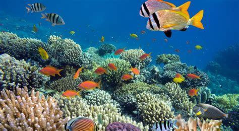 filipina punya wisata bawah laut  indah okezone