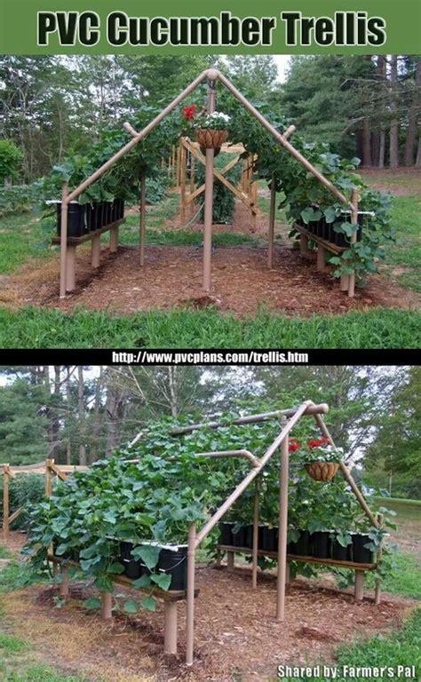 best cucumber trellis design cucumber trellis i really like this home aquaponics pinterest cucumber trellis