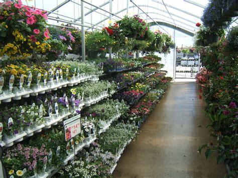 steins garden center what to grow sell in 2015 four greenhouse
