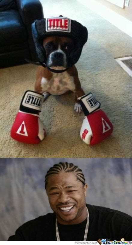 Meme Boxing - boxers memes best collection of funny boxers pictures