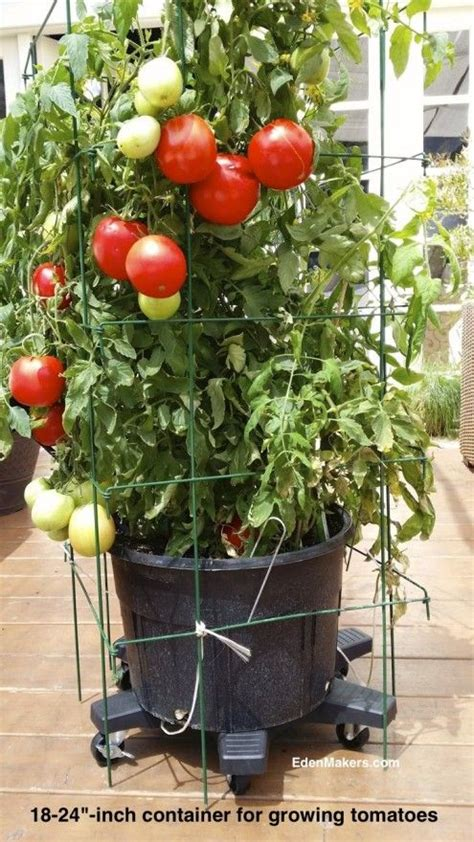 patio tomato plant containers for more organic gardening