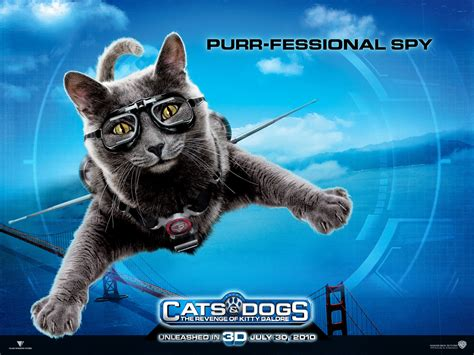 catherine  cat  cats  dogs desktop wallpaper