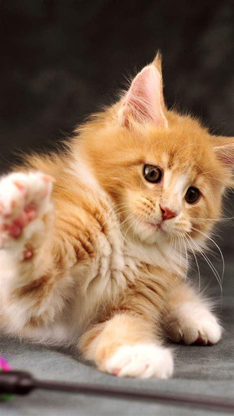 kucing wallpaper  wallpaper gambar