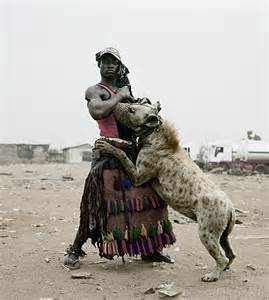 Large Dog Breeds That Dont Shed by The Misunderstood Quirks Of The Hyena Aaaaahhhhshark S Blog