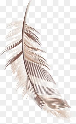 cartoon feather png images vector  psd files