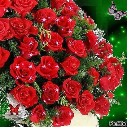 Rosas Flores Whatsapp Rojas Ramo Imagenes Animado
