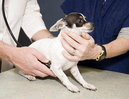 hunde und angst vor dem tierarzt wie man ein glueckliches