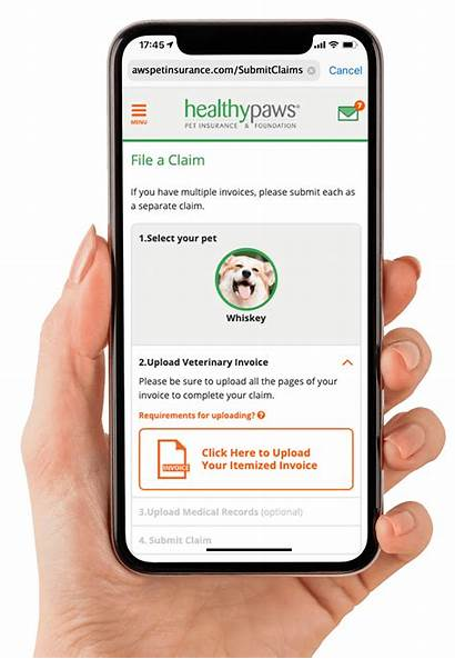Pet Insurance Healthypawspetinsurance Healthy Plan Dogs Cats