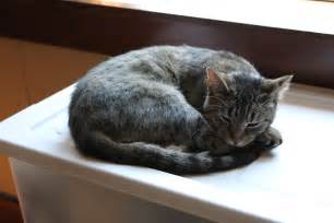 sleeping cat the new normal june 2012