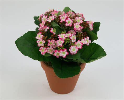 kunstblumen im topf kalanchoe 22cm pink creme im topf lm kunstpflanzen k 252 nstliche blume kunstblumen ebay