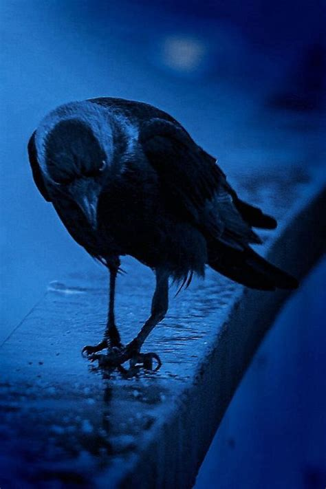 crows significance  indian mythology vedic healing
