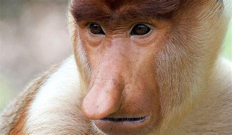 Amazing Magazine: world's ugliest animal