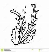Seaweed Cartoon Algae Clipart Line Vector Drawing Retro Pencil Cliparts Illustration sketch template