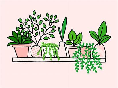 Plant Drawing Shelf Plants Illustration Dribbble Line