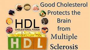 Ldl Hdl Quotient Berechnen : good cholesterol protects the brain from multiple sclerosis youtube ~ Themetempest.com Abrechnung