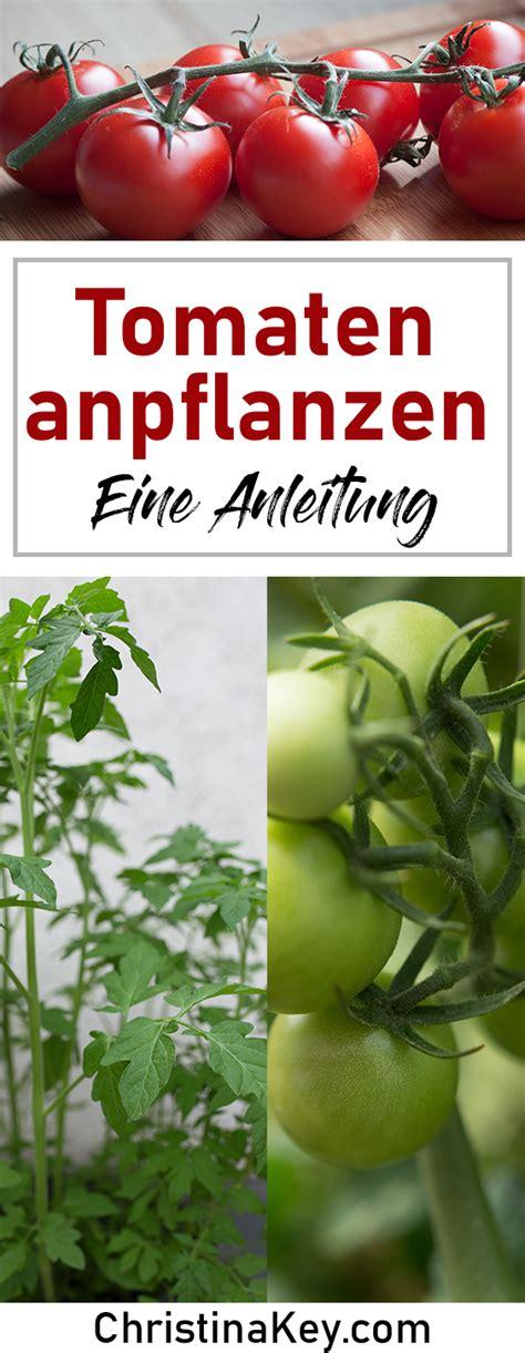 tomaten pflanzen anleitung tomaten pflanzen anleitung kreative fotografie tipps und