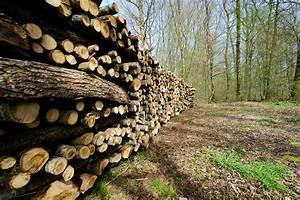 Foret Pour Bois : fili re for t bois un rapport pour renforcer l action ~ Edinachiropracticcenter.com Idées de Décoration