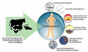 The Human Health Impact Of Antimicrobial Resistance In Animal Populations