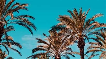 Palm Trees Italy Genoa