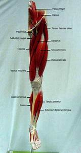 1280 Best Anatomy Images On Pinterest