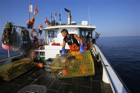 Lobster Boat No Limits by Lobster Boat Captain Had Marijuana And Oxycodone In His