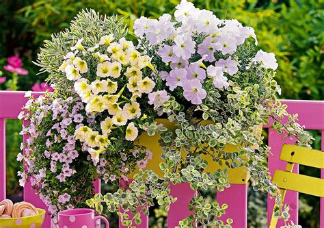 i fiore i fiori da mettere sul davanzale donna moderna