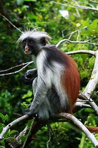What Is The Most Common Color Of Monkeys