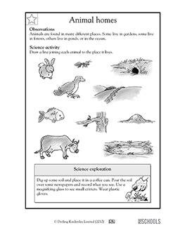 st grade  grade kindergarten science worksheets