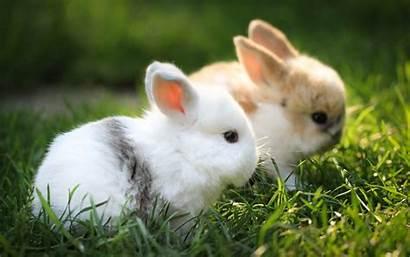 Bunny Cute Wallpapers Rabbit Wallpapertag