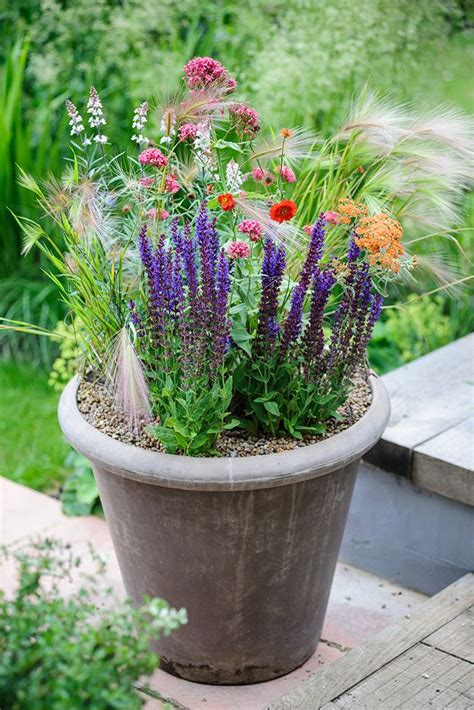 growing echinacea in pots 17 best images about pots for every month on plant pots lavandula angustifolia and