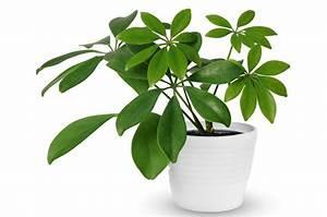 Große übertöpfe Für Zimmerpflanzen : die sch nsten zimmerpflanzen f r faule ~ Bigdaddyawards.com Haus und Dekorationen