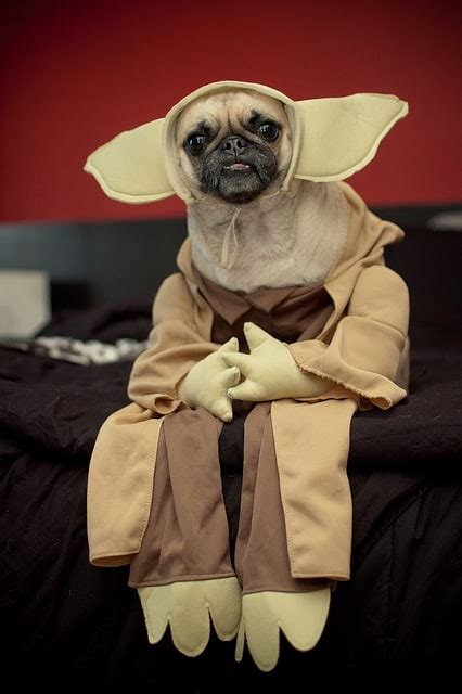 wars star dog dogs dressed characters costume yoda mysterious