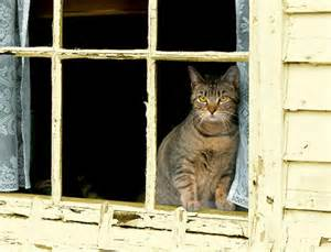 windows cat best seat in the house cats in windows by m j bronstein