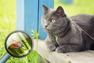 lyme disease in cats when gives your cat lyme disease front page meews