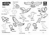 Birds Colouring Sheets sketch template