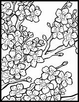 Coloring Chinese Blossom Pages Cherry Tree Colouring Lanterns Lantern Adult Printable Japanese Flower Festival Getcolorings Garden Blossoms Template Sheets Behance sketch template