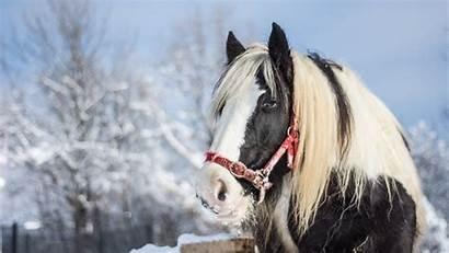 Horse Arabian Winter Horses Wallpapers Desktop 1080