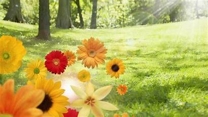 Sunshine Desktop Flowers Backgrounds Wallpapers Computer Wide