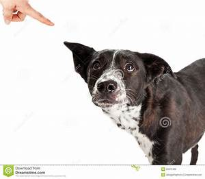 Bad Dog Being Scolded By Owner Stock Photo - Image: 53972405