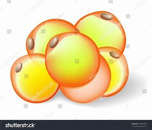 Fat Cells White Adipose Tissue Adipocytes Stock Vector