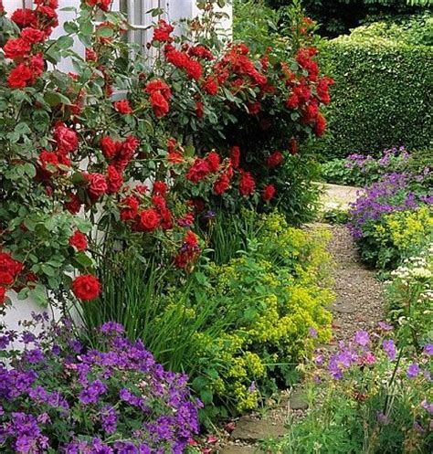 flowers for shaded patio 17 best images about north facing garden on pinterest gardens plants that like shade and