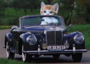 cats and cars basics of feline driving california
