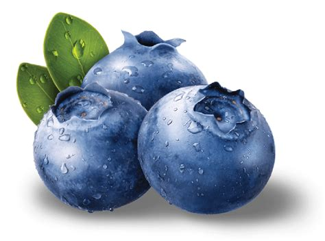 what color are blueberries blueberries png images free