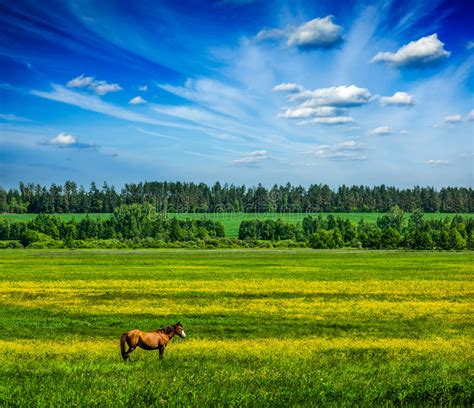 spring summer green scenery lanscape  horse stock