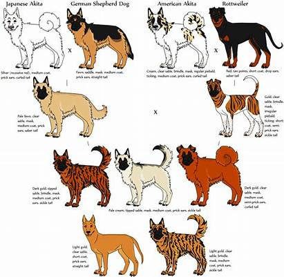 Dog Breeds Breed Dogs Mixed Animals Fictional