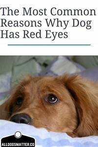 1445 best images about gone to the dogs on pinterest for Red dog daycare