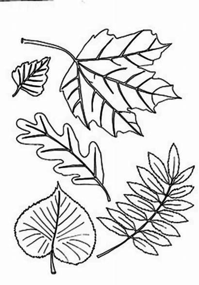 Coloring Leaf Autumn Different Fall Type Leaves