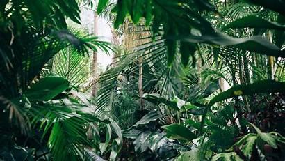 Plants Botanical Garden Greenhouse Background 1080p Fhd