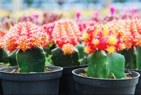 jenis tanaman hias tahan panas indoor outdoor